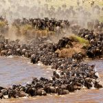 Kenya Safari Tours Holidays
