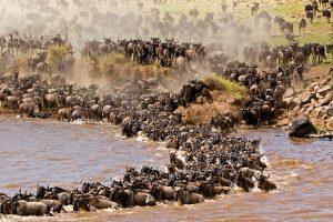 Kenya Safari Tours Holidays