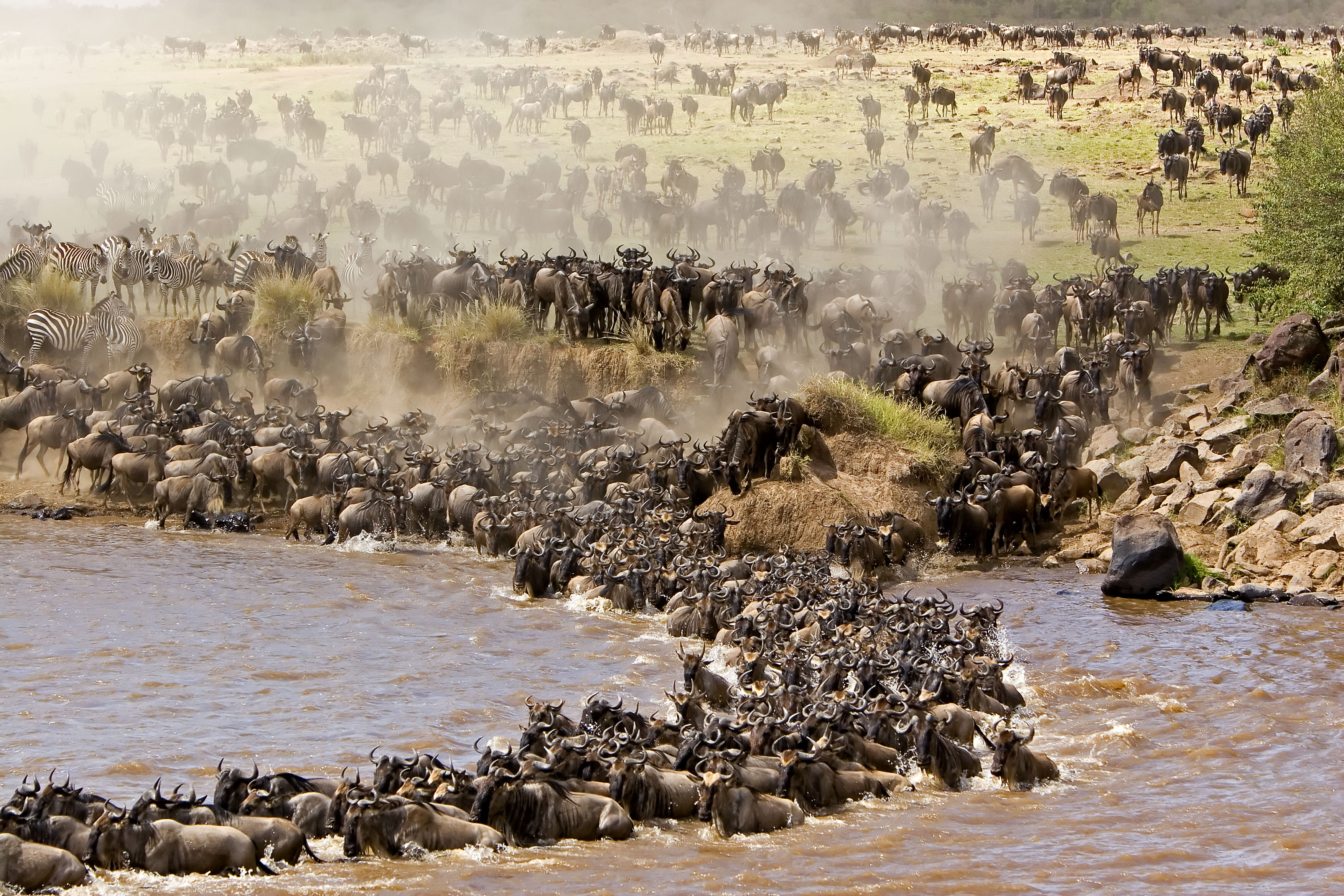 Grumeti River Crossing Wildebeest Migration